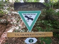 CUBE-Salamandertal-Buchstein-St.-Marien-002-RZL