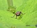 2020-06-29-ÖBG-Makro-Insekten-085-RZL