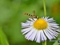 2020-07-07-ÖBG-Makro-Insekten-100-RZL