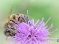 2020-07-09-Makro-Insekten-Paarung-015-RZL