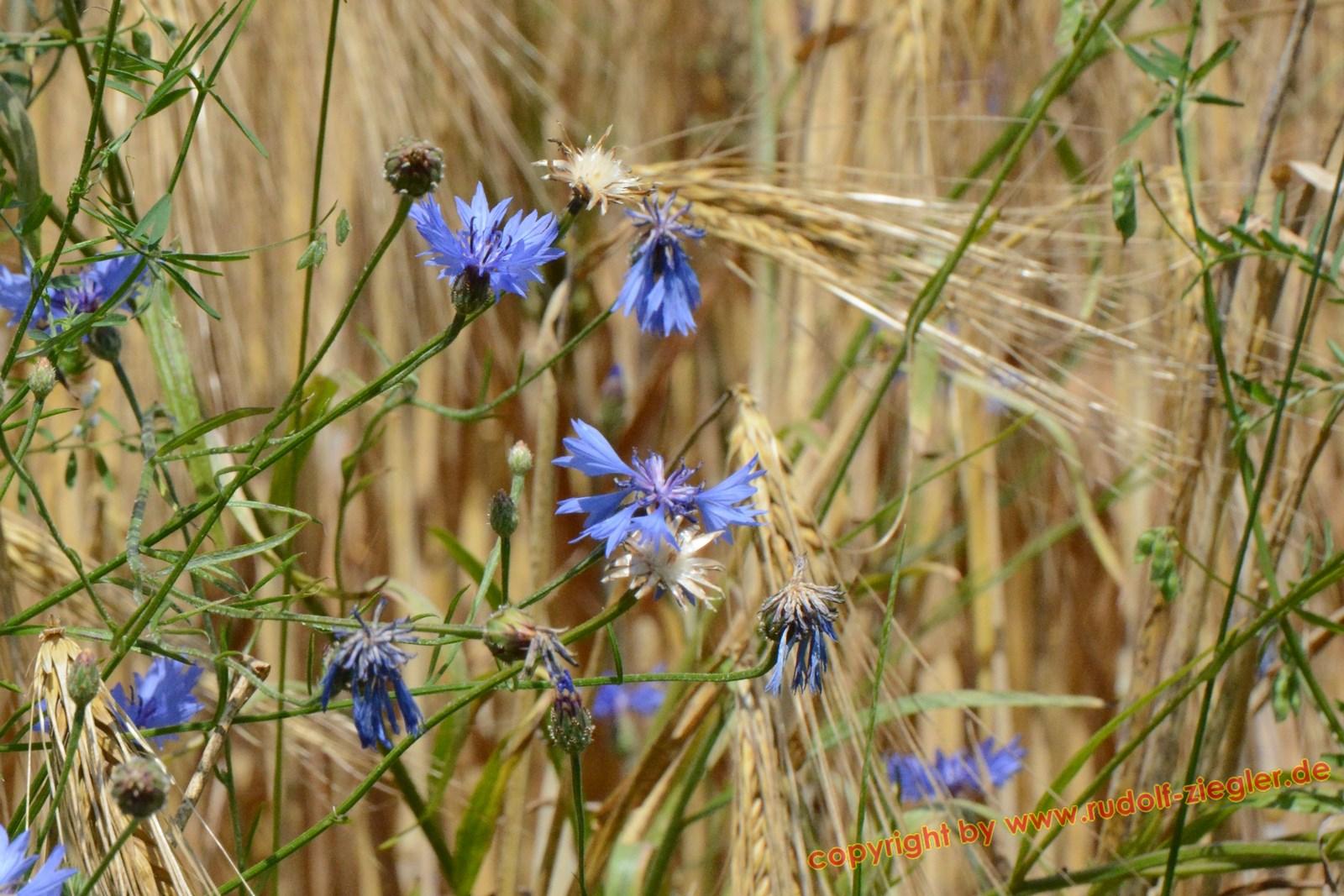 Blumen am Wegesrand 001-A (Kopie)