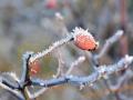 Frost am Oschenberg 033-Bearb (1600x1200)