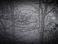 2021-01-02-Nebelmorgen-108-RZL