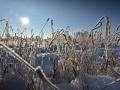 2021-01-11-Bindlacher-Berg-Frost-008-RZL