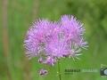 Blüten-ÖBG-021-RZL