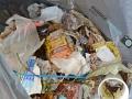 Fichtelsee - Müllsammeln 073-RZL
