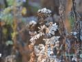 Väterchen Frost 009-RZL