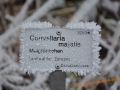 Botanischer Garten Bayreuth 025-Bearb (1600x1200)