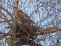 Vögel 004-RZL