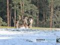 Wildgehege Hufeisen 019-RZL