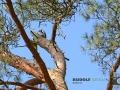 Wildgehege Hufeisen 065-RZL