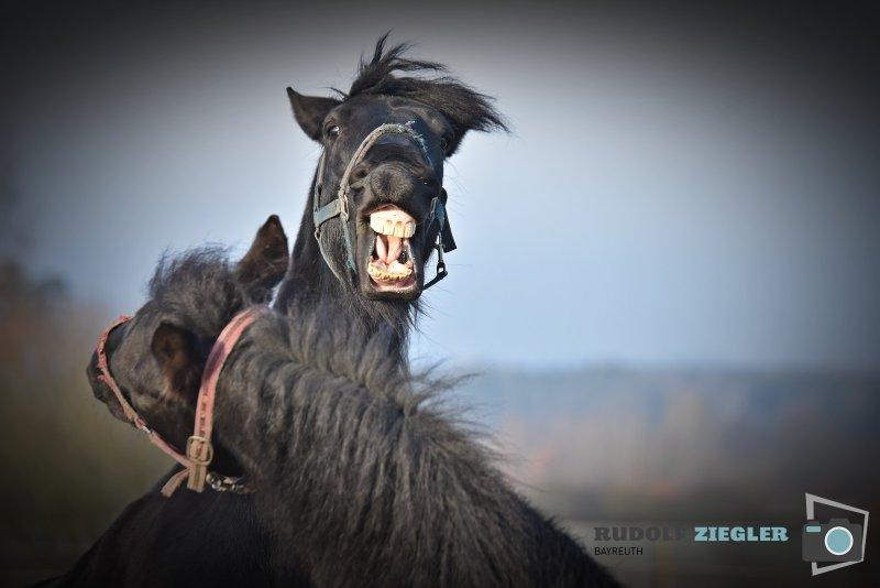 2020-01-12-Pferde-093-RZL1