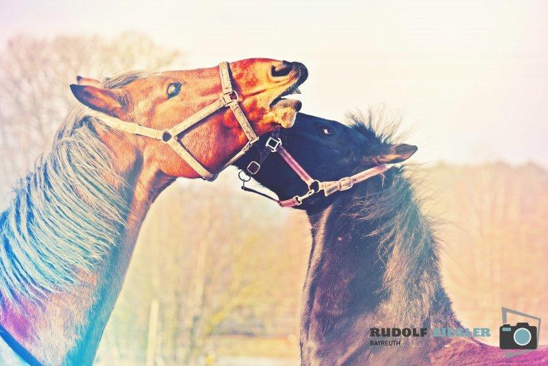 2020-01-12-Pferde-105-RZ-B-L