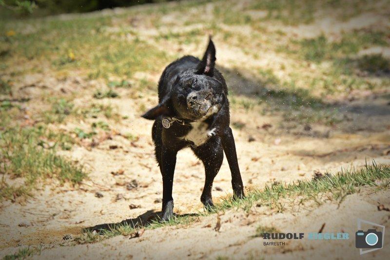2020-04-26-Hund-Waldweiher-RZL1