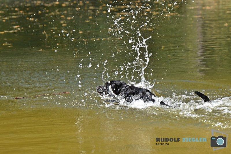 2020-04-26-Hund-Waldweiher-RZL2