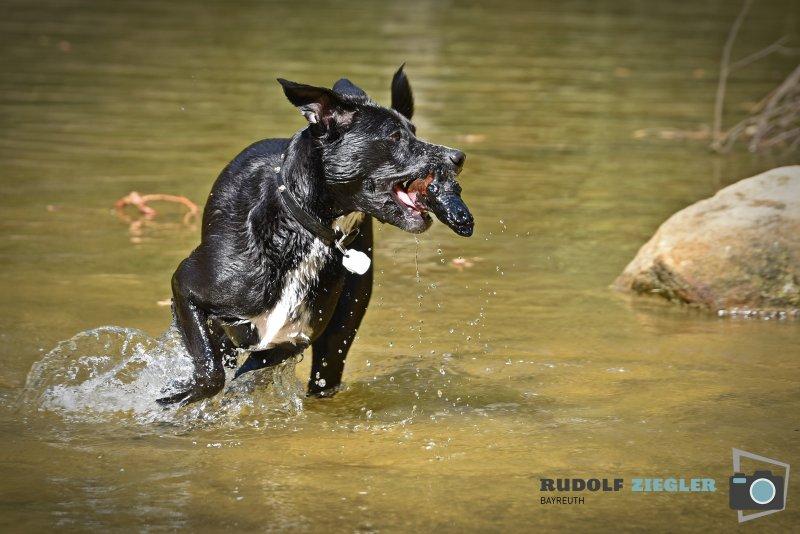 2020-04-26-Hund-Waldweiher-RZL3