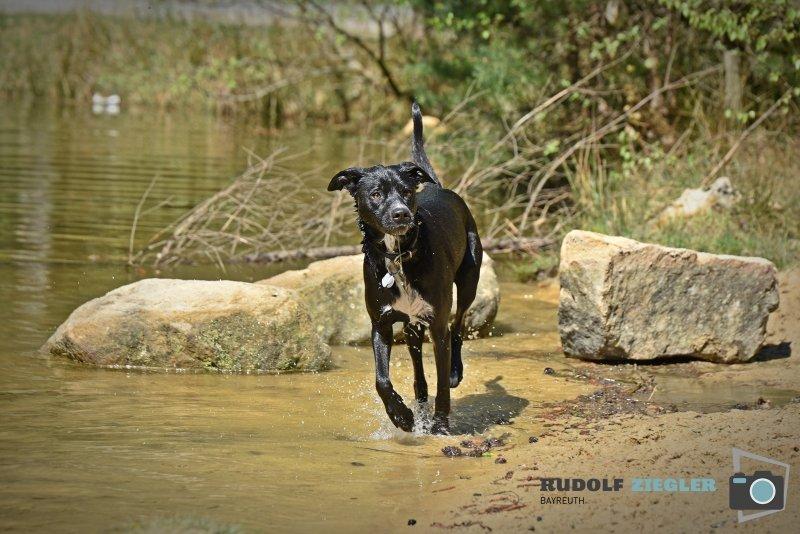 2020-04-26-Hund-Waldweiher-RZL4