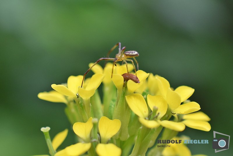 2020-05-28-Insekten-ÖBG-Makro-012-RZL