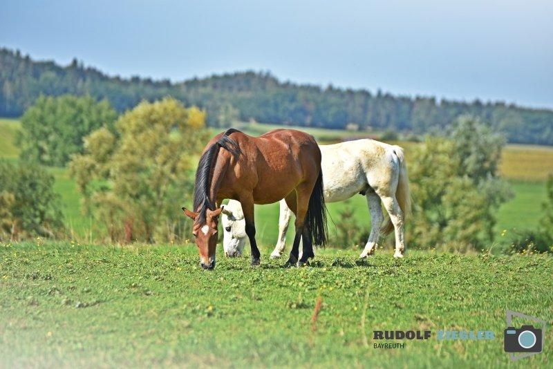 2020-09-14-Pferde-Gubitzmoos-018-RZL