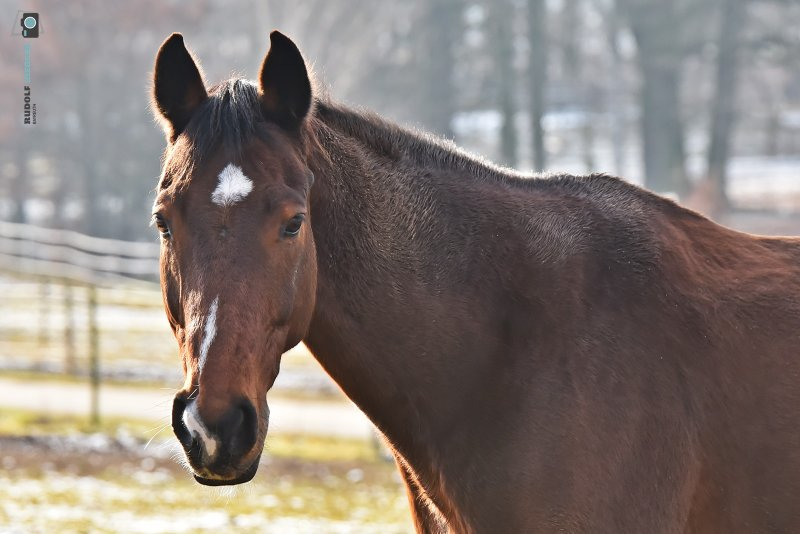 2021-01-10-Wasser-Rehe-Pferde-055-RZL