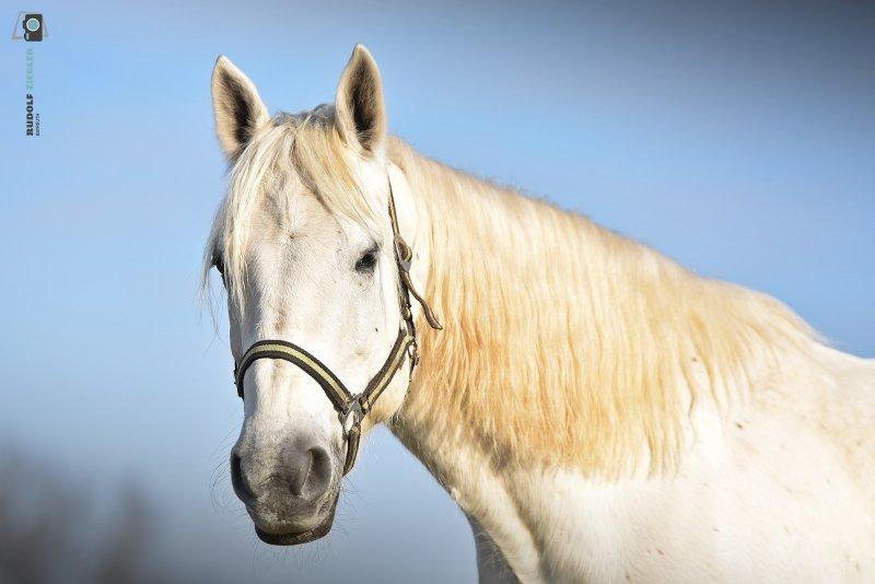 2021-01-10-Wasser-Rehe-Pferde-067-RZL