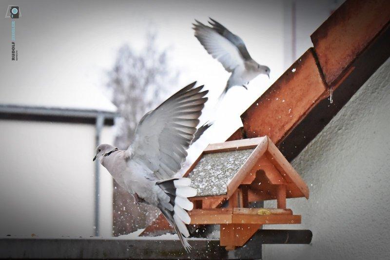 2021-01-15-Vogelhaus-081-RZL