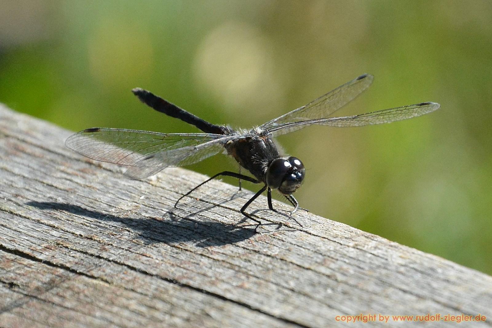 Fichtelsee - Libellen 018-A-S [1600x1200]