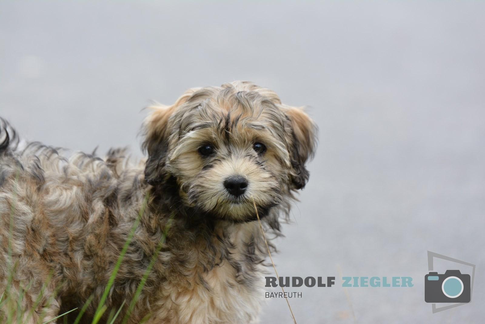 Hund RUDI 020 (1600x1200)
