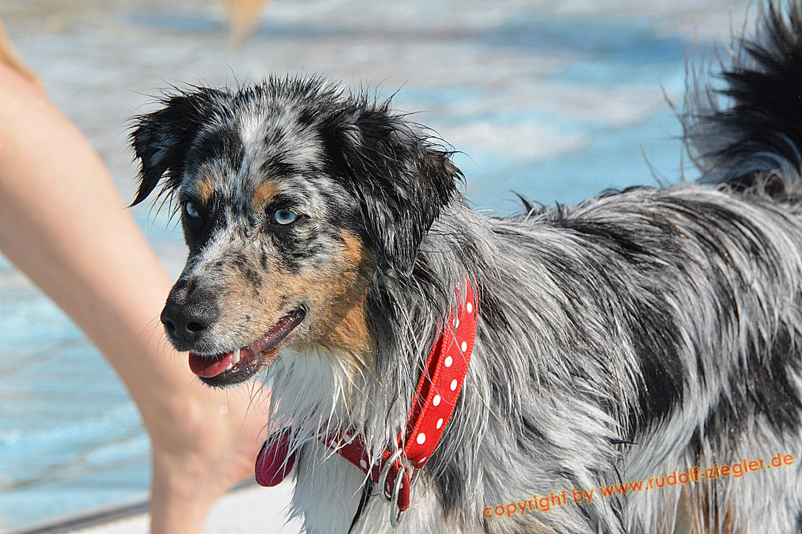 Hundebadetag im Kreuzsteinbad 2016 033-A-S (1600x1200)