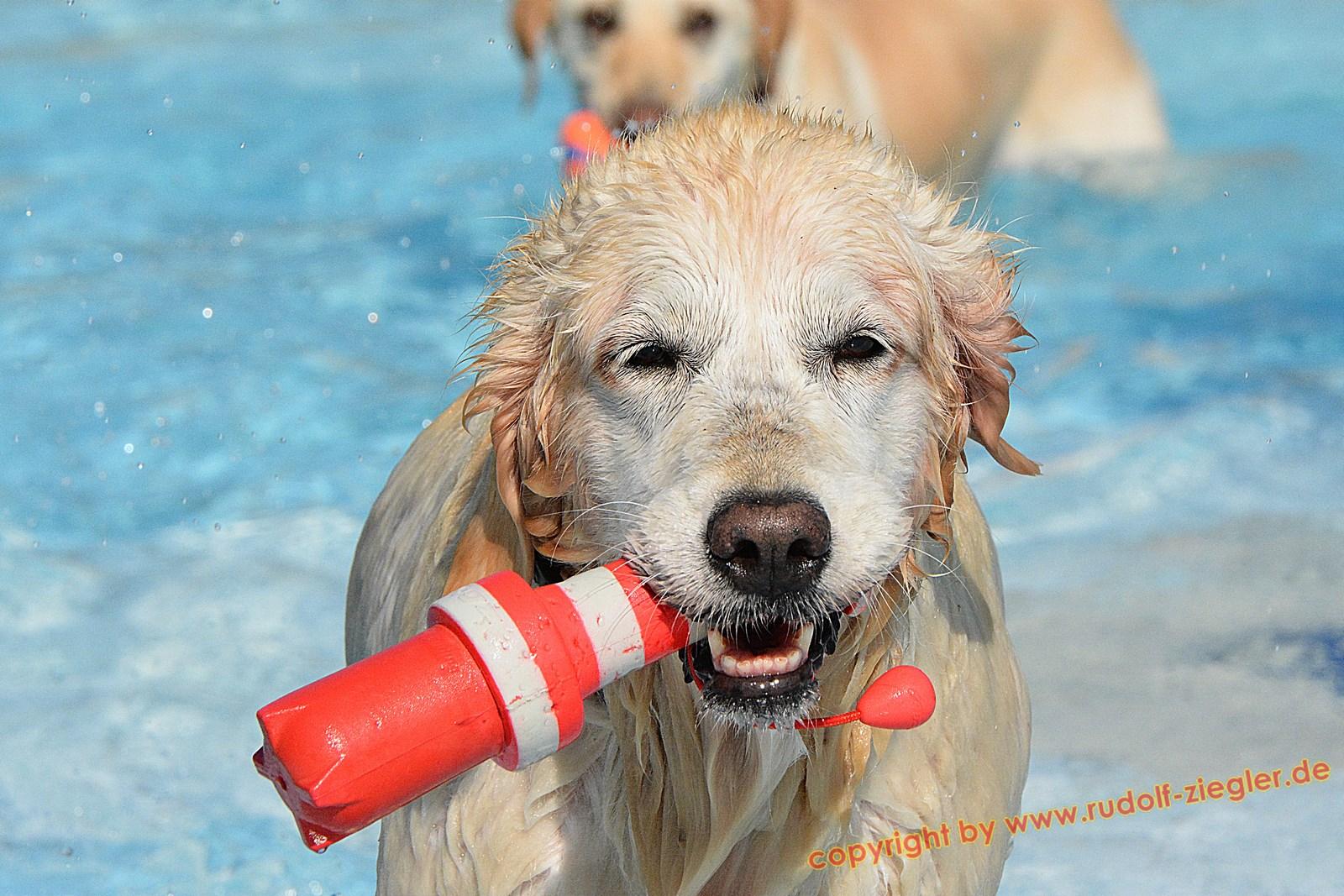 Hundebadetag im Kreuzsteinbad 2016 035-A-S (1600x1200)