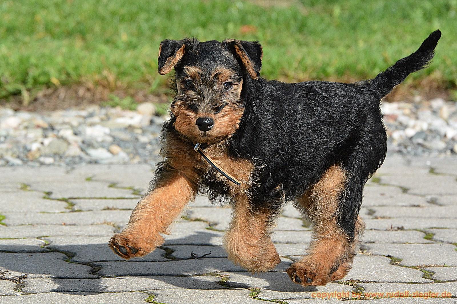 Junger Hund - Tiroler Straße 015-A-S [1600x1200]