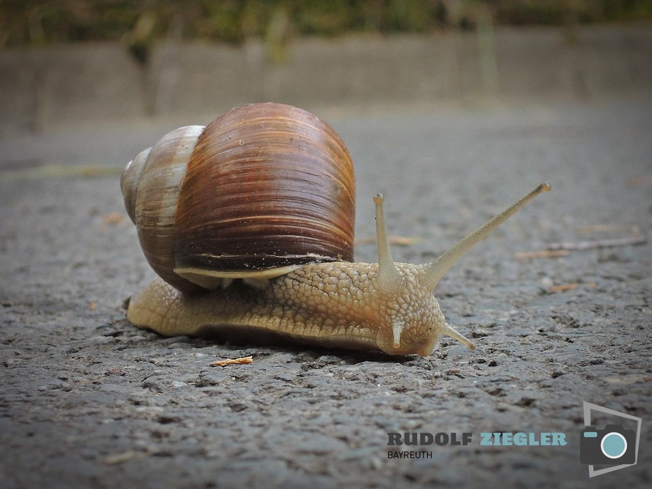 Radtour - -Sophienberg- 008-RZL
