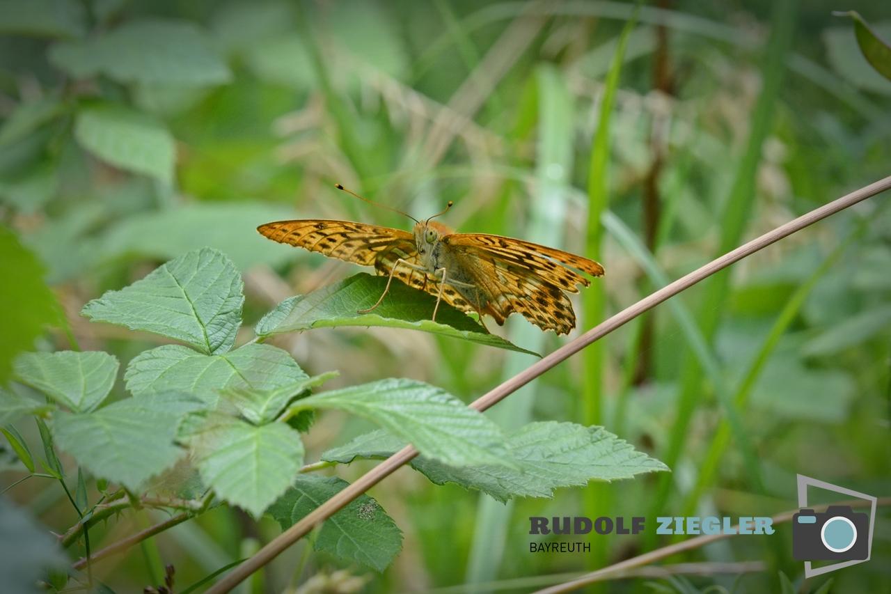 Schmetterlinge 013-RZL