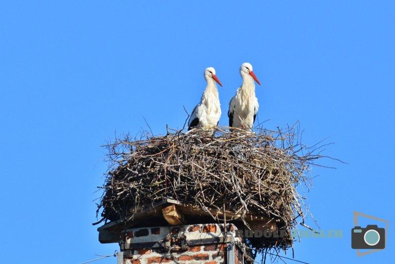 Storch-Vogel-Maus-006-RZL