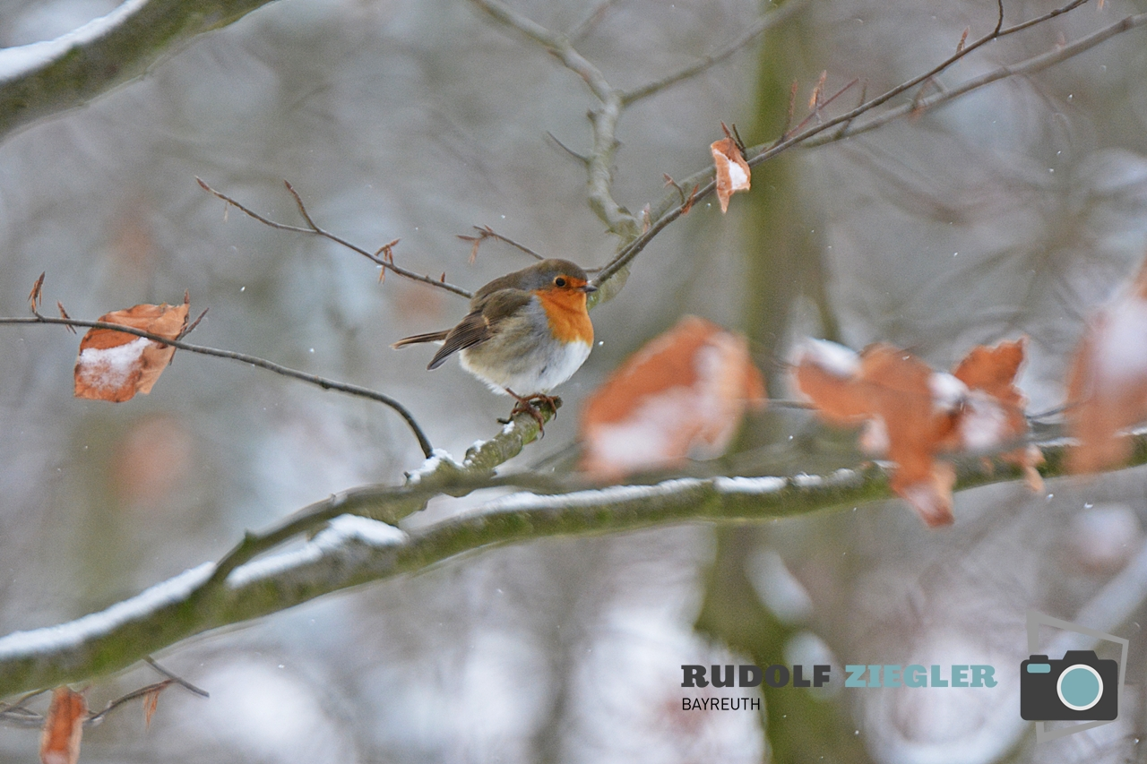 Vögel Eremitage 004-RZL