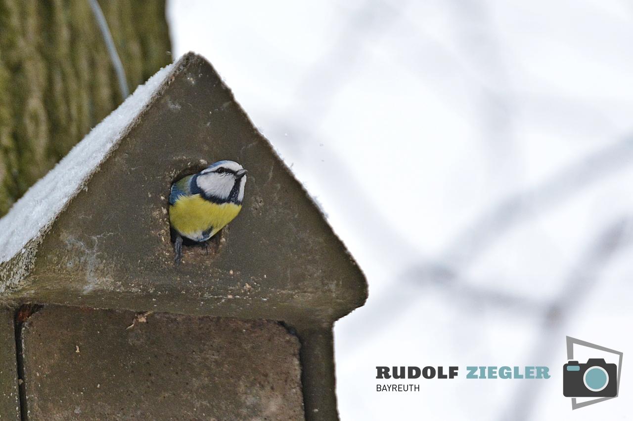 Vögel Eremitage 047-RZL