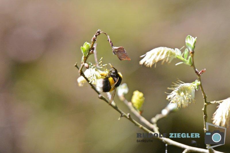 Waldweiher-Bindlach-004-RZL