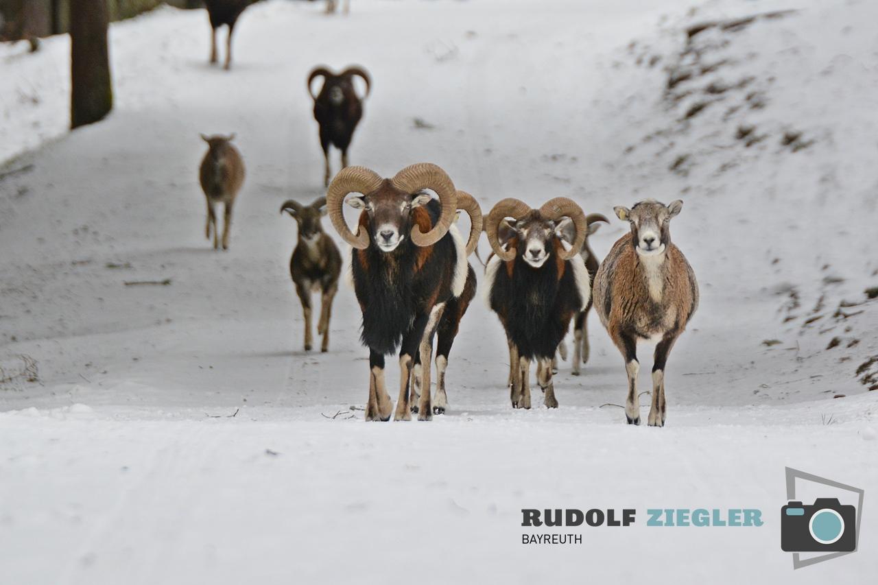 Wildgehege Hufeisen 017-RZL