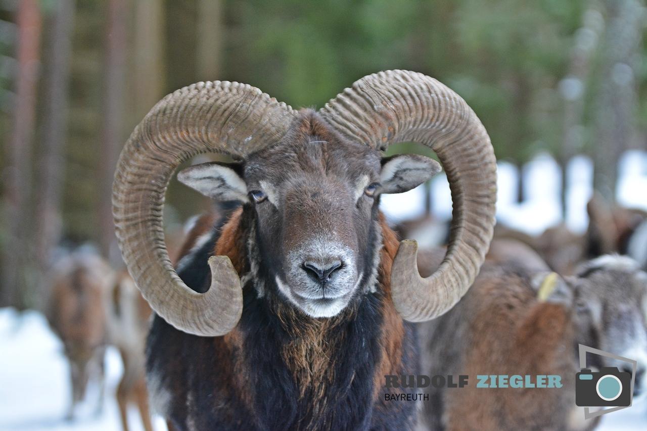 Wildgehege Hufeisen 033-RZL