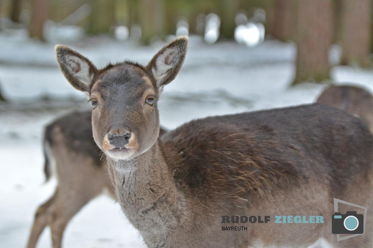 Wildgehege Hufeisen 066-RZL