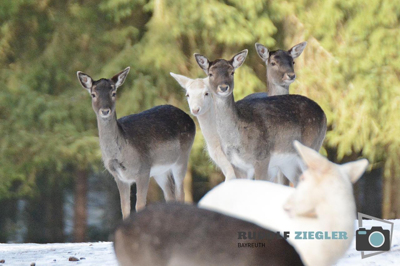Wildgehege Hufeisen 076-RZL