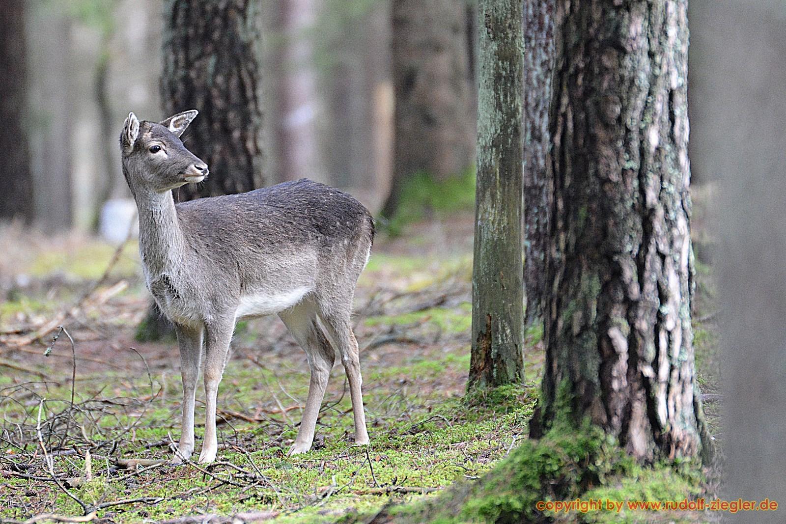 Wildgehege Veldensteiner Forst 057-A-S - 1600x1200
