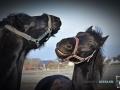 2020-01-12-Pferde-043-RZL