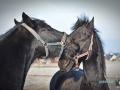 2020-01-12-Pferde-061-RZL