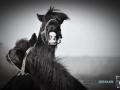 2020-01-12-Pferde-093-RZL2