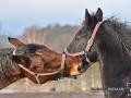 2020-01-12-Pferde-098-RZL