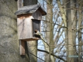 2020-03-27-Vögel-Eichhörnchen-032-RZL