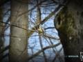 2020-03-27-Vögel-Eichhörnchen-039-RZL
