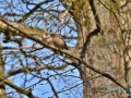 2020-03-27-Vögel-Eichhörnchen-064-RZL