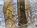 2020-03-27-Vögel-Eichhörnchen-096-RZL
